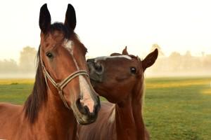 Jakie właściwości posiada dobra pasza dla koni